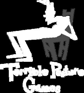 Terrible Posture Games